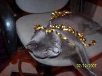 Tazzy is a beautiful grey cat. I used to rescue and I