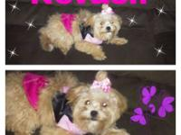 Nevaeh is 8 month old Peek-a-poo puppy loves to play,
