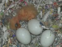 I have 4 love bird babies hatching now if interested my