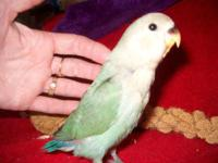 I have about 30 lovebirds that I'd like to sell all