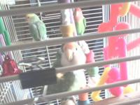 I have some lovebirds I would like to find homes for. I