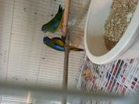 I have few proven breeding pair of lovebirds for