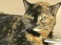 LoveBug's story LoveBug Age: 11 years old Lovebug was