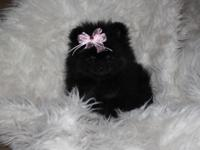 AKC black and tan female, people friendly and ready for