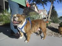 Pumpkin is red brindle and white. She was sired by a