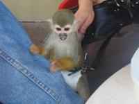 Animal Type: Monkeys Hello,i got some lovely baby