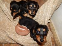 FULFILL DASH, DUSTIN AND SMOKEY, born 12/16/14 and they