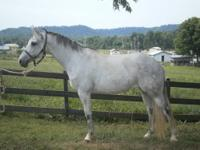 Panda is a stunning, grey Trakehner mare. She has three