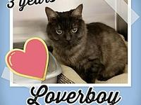 Lover Boy's story Hello Lover Boy, he is 3 years old,