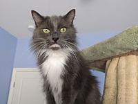 Lovey's story Lovey is a 7 year old, spayed female,