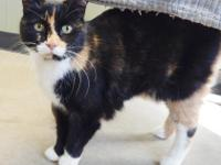 Lovey is a five year old calico sweetheart. She likes