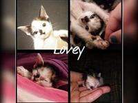 Lovey's story Visit this organization's web site to see