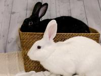 Lovey (black) and Snow (white) are a bonded pair of