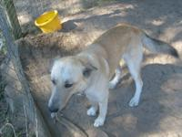 We are a military family that is being transferred to