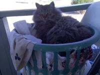 His name is ferret he is about 5 years old and we are