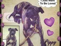 Pippy is a fun loving, sweet girl who is well mannered