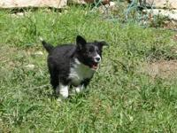 My loving, active Border Collie is in need of an
