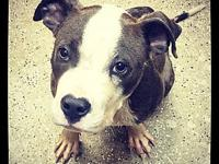 Luc's story FOSTER NEEDED!! Meet Luc... This boy was