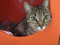LUCA's story Luca is a beautiful one year old tabby who