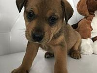 Lucas's story Hey, Im Lucas! I a young playful pup who