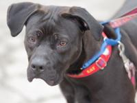Lucas is a lively 1-year-old mixed-breed male with an