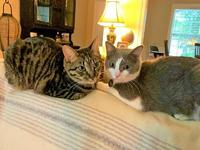 Lucinda & Augustus's story You can fill out an adoption