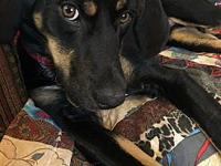 Lucky's story 11-12 months old. Collie/Hound mix. He is