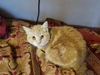 Lucky's story Lucky 1.5 years old DSH See this kitty