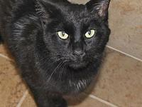 Lucky's story Lucky is a black domestic short hair cat