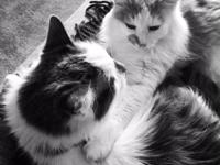URGENT - Lucky & Junie - Bonded senior cats that need a