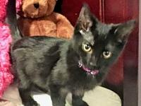 My story My name is Lucky and I am a sweet black female
