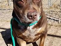 My story Lucky is a 9 yr. old small Pitbull mix. Lucky