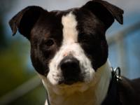 Lucky is a super sweet dog with low to medium activity.