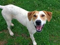 Lucy is a 1 yr old red and white hound mix. Don't let