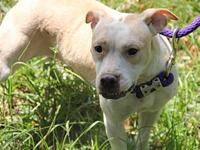 Lucy's story You can fill out an adoption application