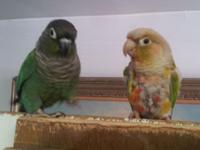 Lucy and Ricky Need a New Home. It saddens be greatly,