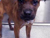 Lucy's story Lucy is a cute female Boxer mix who was