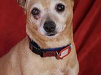 My story Lucy is a sweet and loving little girl. Lucy