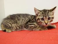 *LUCY's story Shy/scared kitten looking for a quiet