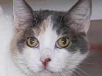 My story Lucy's adoption includes her: spay, microchip