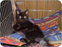 Lucy's story Tested negative for Feline Leukemia &
