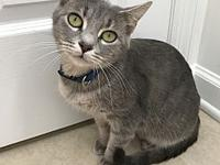 Lucy's story Meet sweet Lucy! Lucy was brought into the