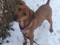 Lucy's story Lucy is currently in a foster home. If