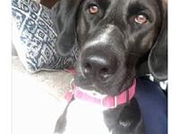 Lucy's story Lucy is a 3 year old lab/pointer mix with