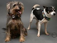 Lucy & Ricky's story Lucy & Ricky are a bonded pair of