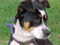 Lucy is a Border Collie/terrier mix about 2 years old.