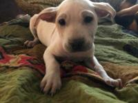 Hi my name is Lucy, I am a 9 week old terrier mix. I am