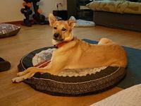 My story Adult Shepherd mixLuke is a super dog looking