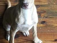 Luke (Adoption Fee $100)'s story Please contact Jim at