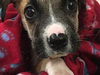 Luke's story Meet Luke! This brave jedi pup is as sweet